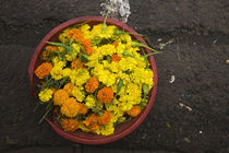 Close-up of flowers in a flower market, Port Louis, Mauritius von Panoramic Images