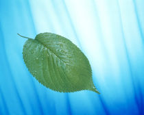 Single green leaf on streaked blue and white by Panoramic Images