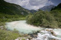 River flowing through a forest von Panoramic Images