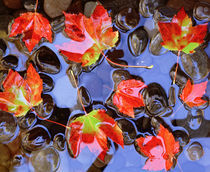 Close-up of maple leaves in the water von Panoramic Images