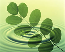 Green leafy branch superimposed on green water ripples von Panoramic Images