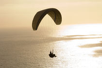 Silhouette of a paraglider flying over an ocean by Panoramic Images