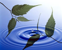 Two branches with green leaves floating above blue water ripples by Panoramic Images