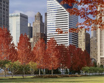 USA, Illinois, Chicago, Millennium Park, Trees in a park, Autumn von Panoramic Images