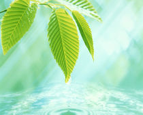 Selective focus close up of green leaves above water ripples in blue von Panoramic Images