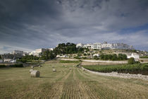 Bales of hay in a field, Locorotondo, Apulia, Italy von Panoramic Images