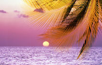 Stylized tropical scene with violet sea, pink sky, setting sun and palm fronds by Panoramic Images