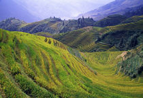 Rice paddy terraces on rolling hills, Longsheng Area, China. by Panoramic Images