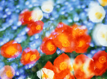 Kaleidoscopic flowers in blues, orange and white von Panoramic Images