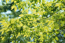 Close-up of leaves on branches by Panoramic Images