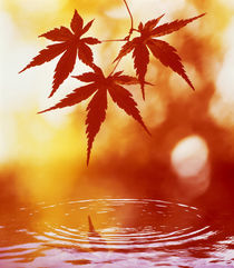 Selective focus of red leaves above water ripples von Panoramic Images