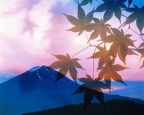 Silhouette of leaves in pink sky with mountain by Panoramic Images