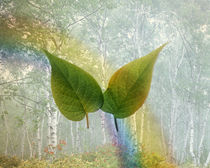 Two green leaves floating in foggy forest with rainbow by Panoramic Images