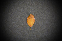 Autumn coloured leaf, On Sandy Beach, Co Waterford, Ireland von Panoramic Images