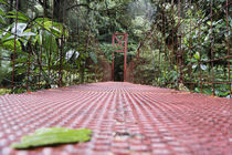 Footbridge in a forest, Puntarenas, Puntarenas Province, Costa Rica by Panoramic Images