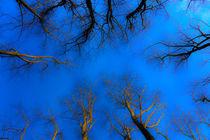Look up and See! von Jon Mack
