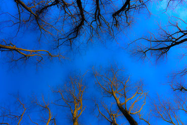 G-gardens-sky-trees-300-ppi