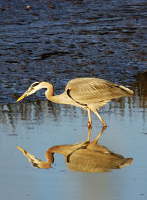 Great Blue Heron at Sunset by Eye in Hand Gallery