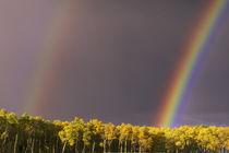 Double Rainbow von Barbara Magnuson & Larry Kimball