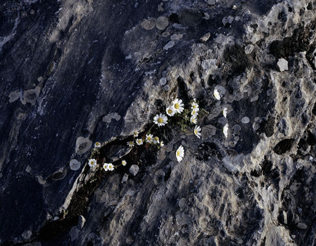 Flowersonthrrock