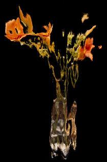 Lily Distortion 161R von Thom Gourley
