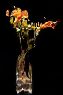 Lily Distortion 168R von Thom Gourley