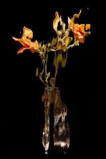 Lily Distortion 176L von Thom Gourley