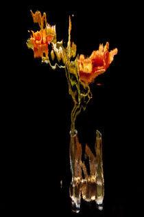 Lily Distortion 186R von Thom Gourley