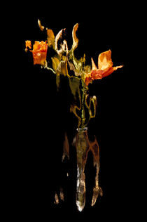 Lily Distortion 188R von Thom Gourley