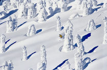 Tree Ski von Scott Spiker