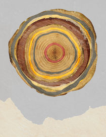 Tree Rings by Rachael Shankman