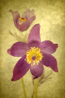 Frühlingsromanze von Uta Hansen