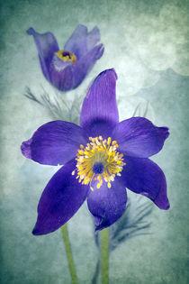Frühlingsromanze II von Uta Hansen