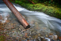 Log, Oneonta Falls by Cameron Booth