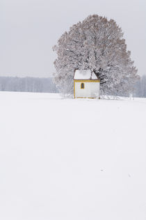 Frosty morning in the Bavarian countryside. by Tom Hanslien