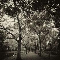 Autumn Avenue von Daniel Hachmann