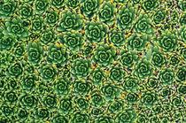 Alpine Pattern von Ben Bolden