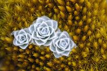 Alpine Flowers von Ben Bolden