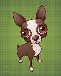 Zippy-bostonterrier-large