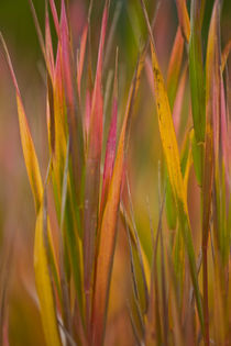 Autumn Grasses by Lee Rentz