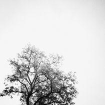 Zen von Daniel Hachmann