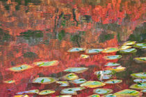 Seattle-japanese-garden-in-autumn-2