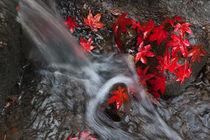 Seattle-japanese-garden-in-autumn-4