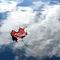 Red-leaf-blue-sky-reflection-r