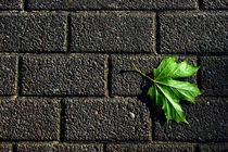 green leaf on dark pavement by Darius Norvilas
