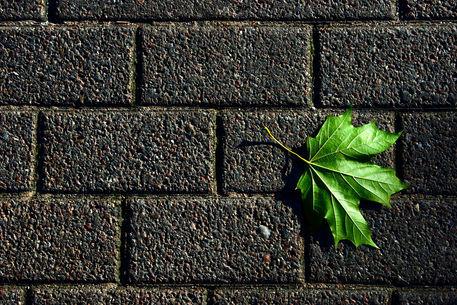 Wall-green-leaf