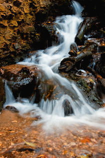 Autumn-rivulet-vertical