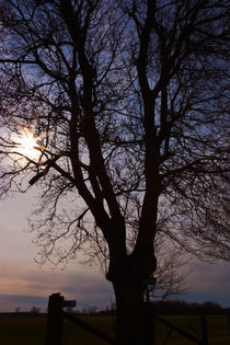 Tree Silhouette Sunset by Ian C Whitworth