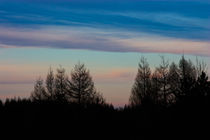 Tree Silhouettes Sunset by Ian C Whitworth