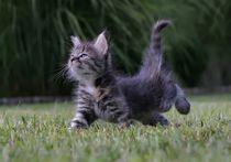 Kitty by Albin Bezjak